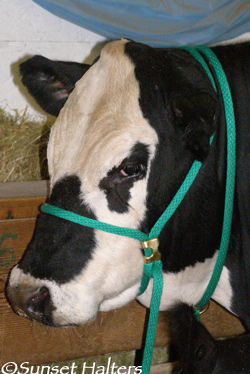 cow halter neck rope