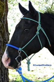 diamond braid, halter bridle, rope halter, trail riding