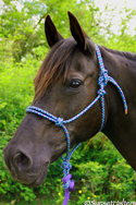 Diamond Braid Rope Halter