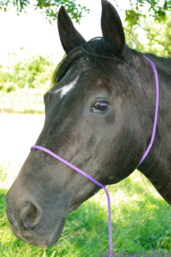 Quick Catch Rope Halter
